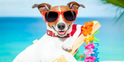 5 Tips to Keep Your Dog Cool on Hot Summer Days, Fairport, New York