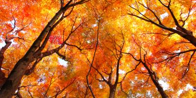 5 Trees That Are Perfect for Your Home in Nebraska, Lincoln, Nebraska