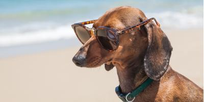 3 Signs of Heat Exhaustion in Dogs, Honolulu, Hawaii