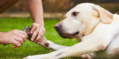 Why Should I Trim My Dog's Nails Regularly?, Honolulu, Hawaii