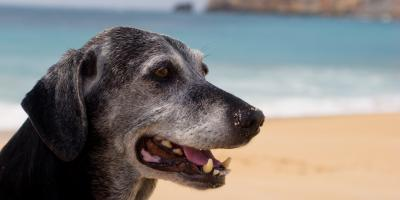 3 Changes That Occur in Aging Dogs, Clarksville, Arkansas