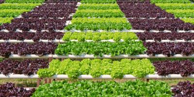 Understanding the pH Balance of Plants in Hydroponics, Pueblo, Colorado