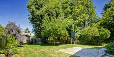 3 Benefits of Raising Your Tree Canopy, Henrietta, New York