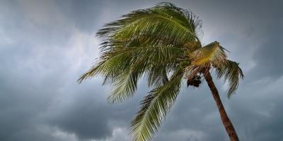 How to Prepare for a Hurricane With Lumber, Koolaupoko, Hawaii
