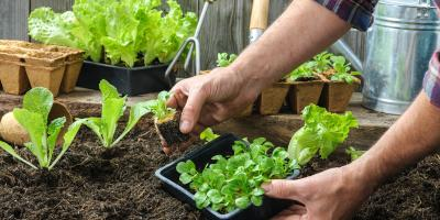 Must-Have Gardening Supplies for Homeowners, Bethel, Ohio