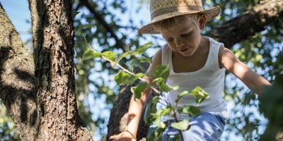 How to Care for Your Trees, Lincoln, Nebraska