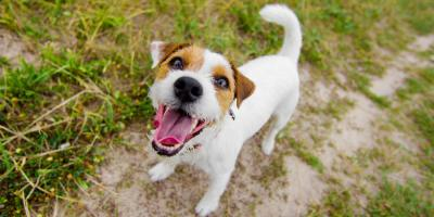 Churchville's Top Doggy Daycare Lists 4 Ways to Reduce Barking, Churchville, New York