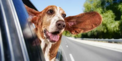 Local Auto Repair Shop Explains How to Keep Your Pets Safe in the Car, Sigel, Wisconsin