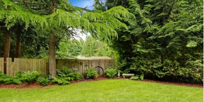 What Are the Watering Rules for Tree Care?, Jefferson, Georgia