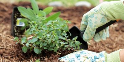 Landscaping Experts Highlight 3 Key Benefits of Mulch Services, Lexington-Fayette, Kentucky