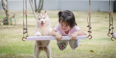 What to Know About Establishing a Pet Trust, Honolulu, Hawaii