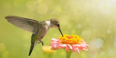 Gardening Do's & Don'ts for Attracting Hummingbirds, Fairfield, Ohio