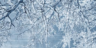 3 Common Winter Allergies That Affect Your Eyes, Fairbanks, Alaska