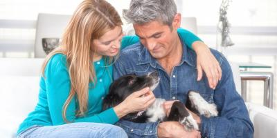 3 Ways to Protect Your HVAC System From a New Pet, Lexington-Fayette Central, Kentucky