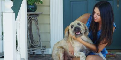 3 Signs Your Dog Has Seasonal Allergies, Clarksville, Arkansas