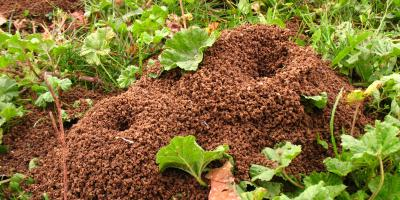 4 Ways You're Attracting Ants Into Your Home, Lexington-Fayette, Kentucky