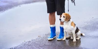 Pet Hospital's 5 Tips for Preparing for Hurricane Season, Ewa, Hawaii