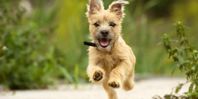 How to Protect Your Dog Against Ticks, Fairbanks North Star, Alaska