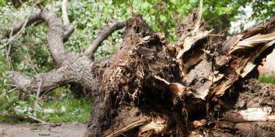 Top 3 Tree Removal Tips for Spring, Jessup, Maryland