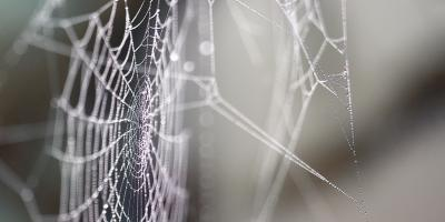 A Guide to California House Spiders, Sutter Creek, California