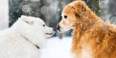 3 Essential Pet Care Tips for the Winter Months, Waynesboro, Virginia