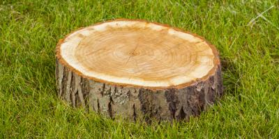 5 Reasons You Should Do Stump Grinding, Summerdale, Alabama