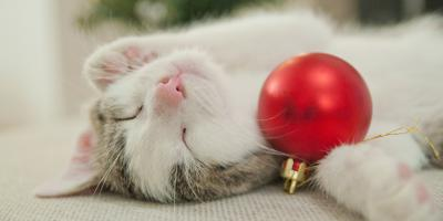 5 Holiday Pet Dangers To Watch Out For , Avon, New York