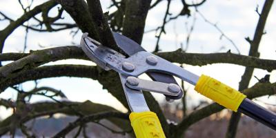 A Brief Primer on Tree Pruning, Hempstead, New York