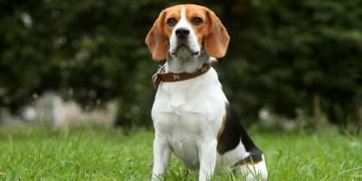 How Does Canine-Led Bedbug Detection Work?, Milford, Connecticut