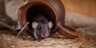 4 Essential Tips for Keeping Rodents Out of Your Home, Greece, New York