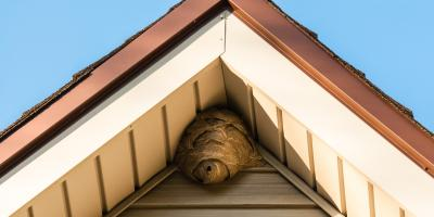 3 Pests You May Find in St. Louis, St. Louis, Missouri