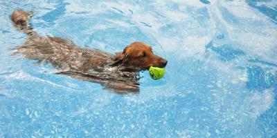 3 Ways to Keep Your Pet Safe Around a Swimming Pool, Gulf Shores, Alabama