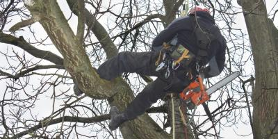 Forgo a DIY Approach & Hire Professional Tree Services for These 3 Reasons, Commerce, Georgia