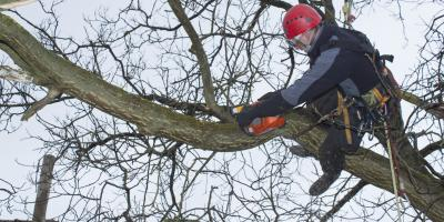 3 Ways Trees Can Harm Your Roof, Anchorage, Alaska