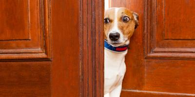3 Pet Training Tips to Help Dogs Overcome Their Fear of Strangers, Covington, Kentucky