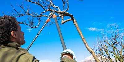 When is the Best Time to Trim Trees and Shrubs?, Scottsville, New York