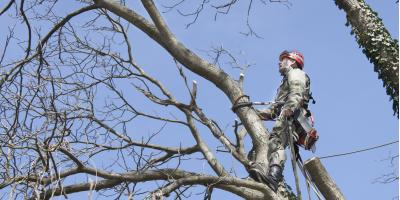 An Arborist Answers Your Tree Pruning FAQ, Hilo, Hawaii