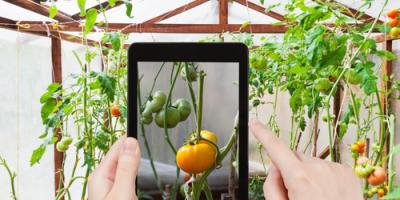 5 Vegetables You Can Grow Indoors This Winter, Quaker City, Ohio