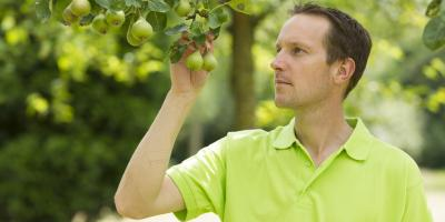 3 Attributes to Look for in a Tree Care Service, Lincoln, Nebraska