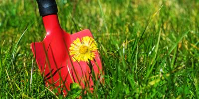 Weed Control Tips for Your Yard, North Hobbs, New Mexico