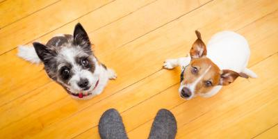 A Dog Kennel's Tips to Keep Your Pup From Begging, Newport-Fort Thomas, Kentucky