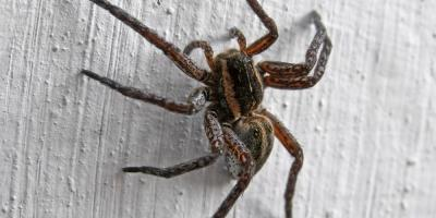3 Benefits of Spider Control, Lancaster, Kentucky