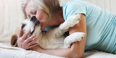Pet Owner? The Do's & Don'ts for Keeping a Clean Home, Raleigh, North Carolina