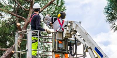 The Do's and Don'ts of Tree Care, St. Charles, Missouri