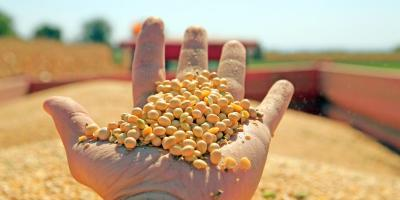 3 Ways to Maintain Soybean Seed Quality, Adams, Wisconsin