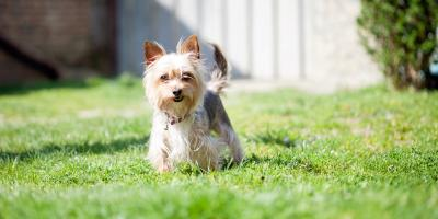 3 Reasons to Clean Up After Your Dog, Lincoln, Nebraska