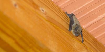 How Do Bats Use Echolocation? , Miami, Ohio