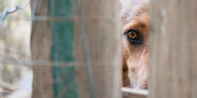 Bit by a Dog? 3 Signs You Should Call a Personal Injury Law Professional, La Crosse, Wisconsin
