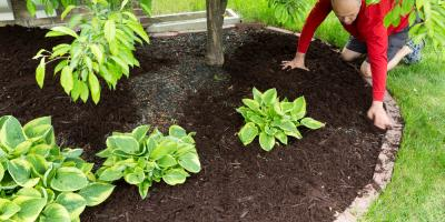3 Reasons to Use Shredded Hardwood Mulch in Your Yard, Perryville, Missouri
