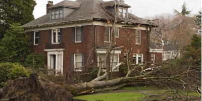 4 Ways to Prepare Your Trees For Hurricanes, High Point, North Carolina